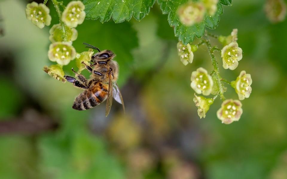 A méhpempő egy különleges méhtermék
