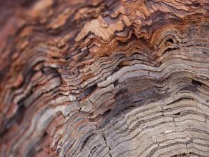 nemzetkozi fa kereskedes ez a woodmarket.eu